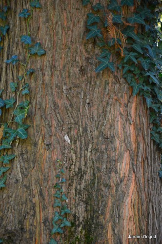 troncs,automne,vieilles photos 081.JPG
