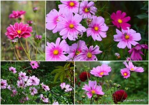 2017-10-01 Neuvic,jardin,champignons canal2.jpg