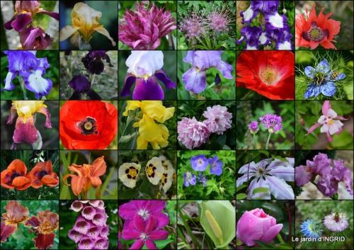 2015-06-04 épouvantails ,jardin,roses.jpg