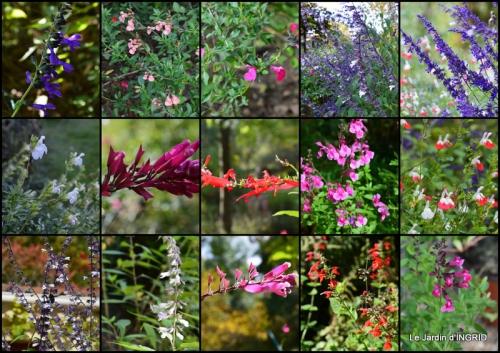 2014-10-06 jardin,St Avit Seigneur brocante,Neuvic fête des plantes2.jpg