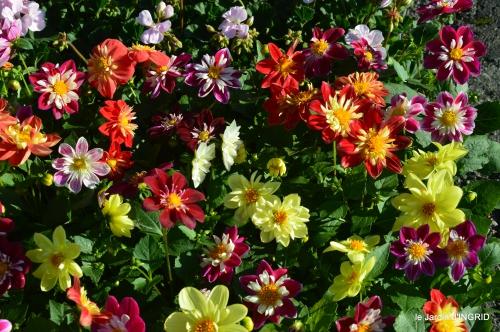 coquelicots,fête des fleurs Lalinde,fouleix,jardinage 067.JPG