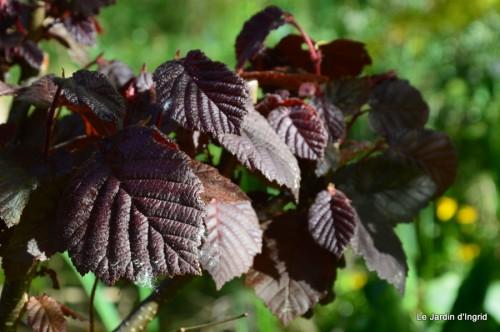 mésanges,escargots,ros. de banks,abeilles,Monpazier,Banes,Forêt 117.JPG