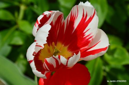 jardin printemps 136.JPG