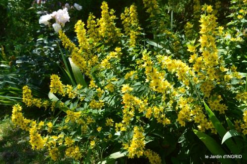 le jardin de Frescati,roses 080.JPG
