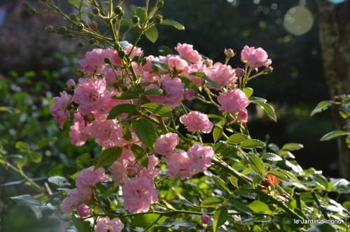 jardin,fruits,Caro,papillons,manthe religieuse,Lalinde 049.JPG
