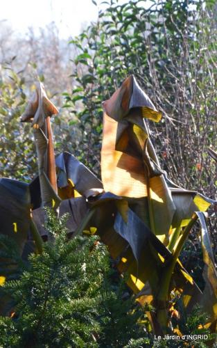oiseaux,travaux,arbustes,les dernières fleurs 028.JPG