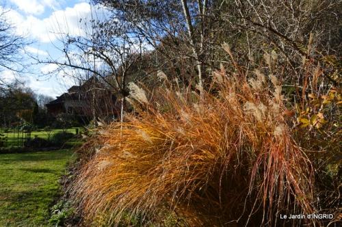 taille,arbustes,poinsettia,décos 051.JPG