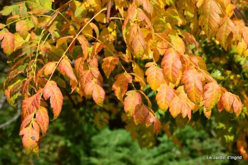 automne,arbres,inondation 088.JPG