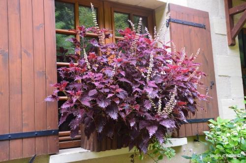 jardin pluie,chateau Losse 064.JPG