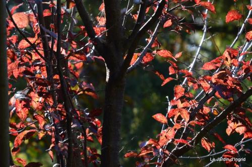 jardin automne,Arya avec Nicky 026.JPG