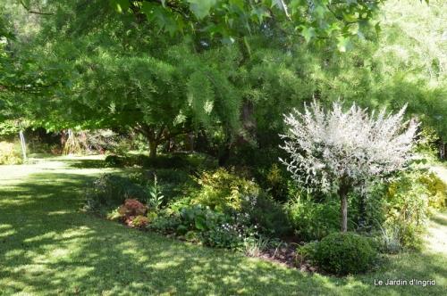 jardin avril et mai, 117.JPG