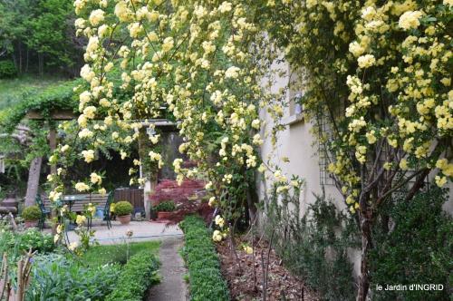 rosier de banks,jardin,cygnes,osier 058.JPG