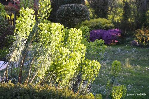 jardin,Ciron,pigeons,magnolia,amélanchier 177.jpg