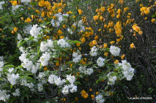 geais,jardin,printemps 052.JPG