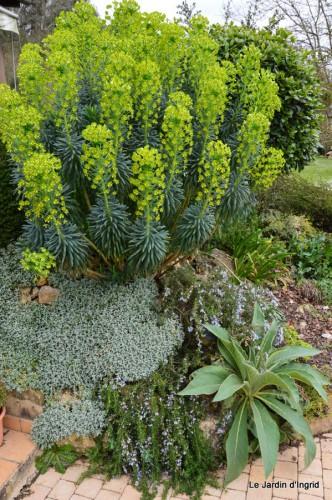 jardin ,cane sauvage,paquerettes,tulipes 017.JPG
