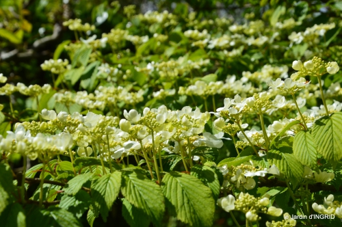 jardin printemps 056.JPG