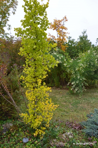 brocante st avit Se.jardin st Avt,récolte tomates 139.JPG