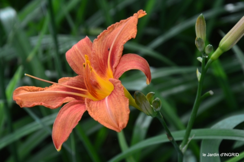 jardin,chez Bernadette,puces,cygnes,pluie 163.JPG