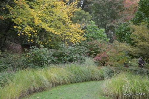 la Sedelle,étang de Riault,cyclamens 033.JPG