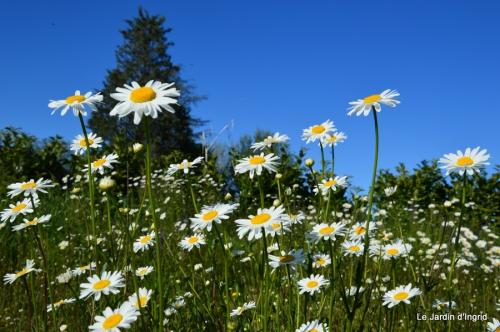 géraniums,glycine Monpazier,cabane,arums,fleurs sauvages 077.JPG