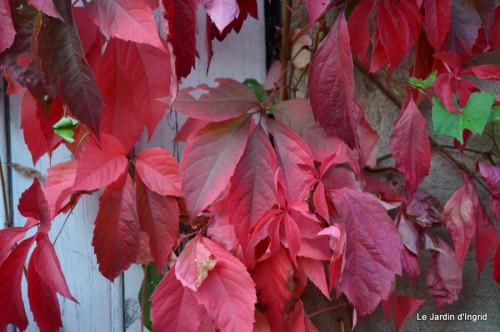 jardin début d'automne ,Sophie,rouge 067.JPG