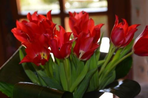 mésanges nonnette,orchidées,jardin,amaryllis 072.JPG