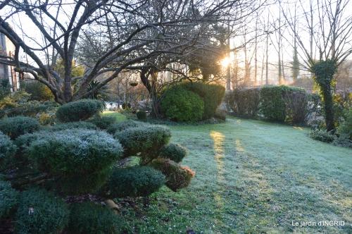 première gelée,compositions florales à garder,jardin 001.JPG