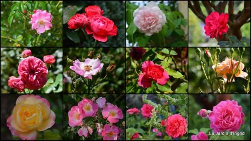 2013-08-29 jardin,fruits,Caro,papillons,manthe religieuse,Lalinde2.jpg