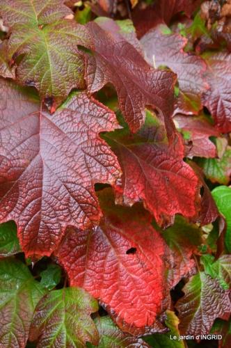 feuillages d'automne et tonte de la pelouse 030.JPG