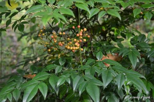 troncs,automne,vieilles photos 038.JPG