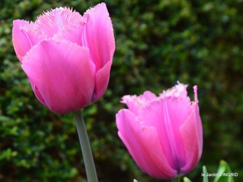 herons,fête des fleurs Bergerac,tulipes,jardin 042.JPG