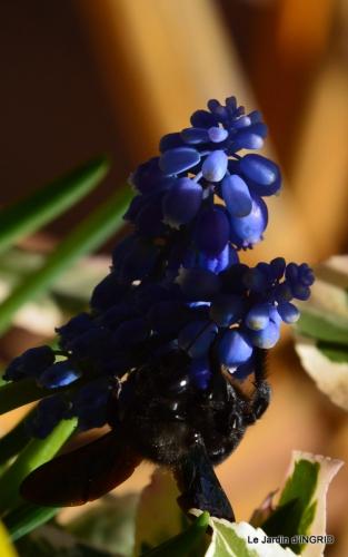 jardinière,insectes,achats 019.JPG