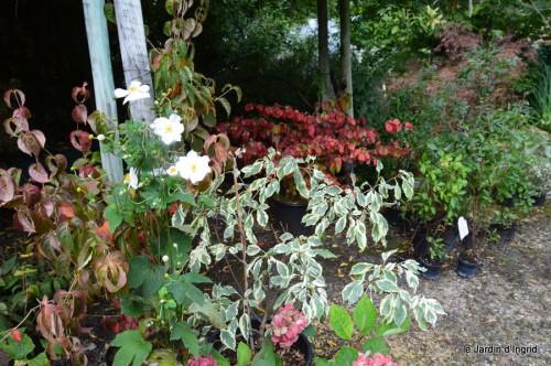 mariage,jardin,la Brande,figues 151.JPG