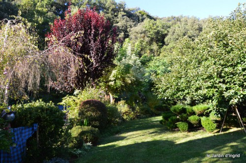 jardin,asters,fleurs blanches,chatte,rosiers roses 038.JPG