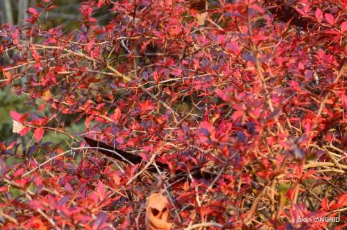 fin de l'automne,Lalinde,bouquet de l'avent 056.JPG