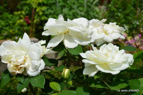 Cadouin,ancolies,roses,pollen,osier,photos Fabien,coquelicots 195.JPG