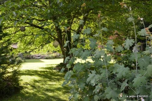 mon jardin,dégats buis, 087.JPG