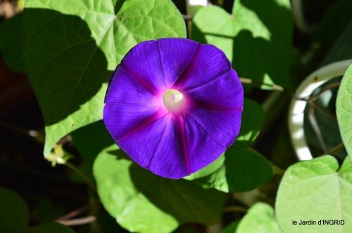 Issygeac,st Avit Seigneur,carpes kois,jardin,fleurs rouges 001.JPG