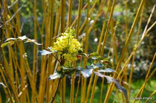tonte,jardin,fleurettes 027.JPG