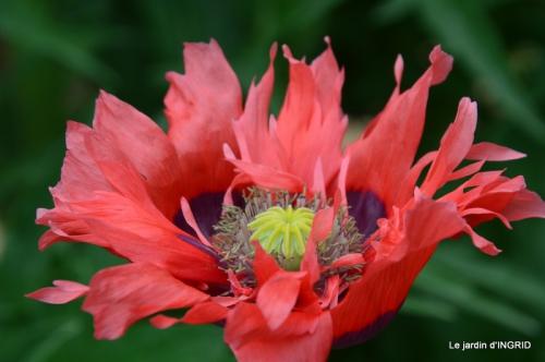 Roses du jardin,soirée Monpazier,puces Eymet 228.JPG