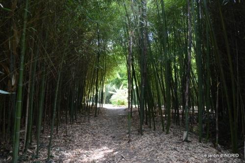 bambous Roque Gageac,jardin,bouquet 153.JPG