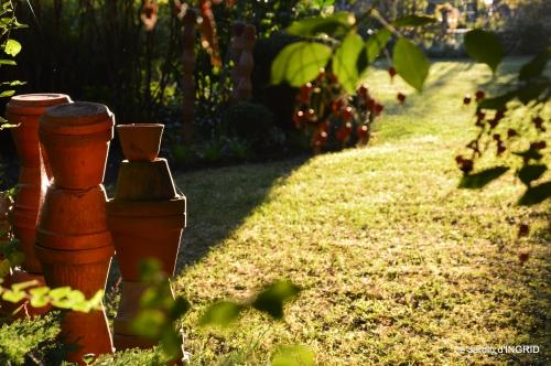 cygnes,jardin,apres la tonte 108.JPG