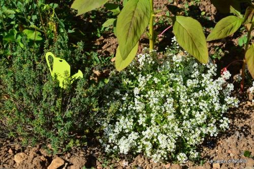 albizia,bouquet,plantes  en A 036.JPG