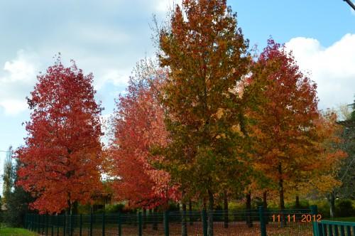 petit érable,le canal et lejardin àl'automne 121.JPG