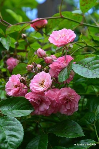jardin,portes ouvertes,Julie 094.JPG