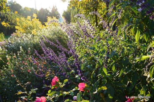 jardin Mme Perichou,grandes fleurs,bouquet,jardin 125.JPG