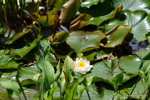 la mare,pt jardin,passiflore,Sophie,le canal,vues jardin 053.JPG