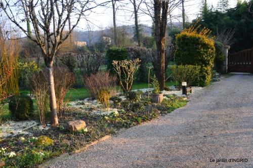 paillage,primevères,jonquilles,jardin 077.JPG