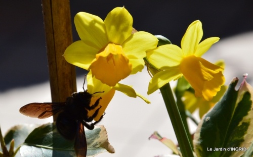 jardinière,insectes,achats 011.JPG