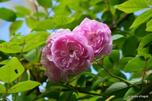 jardin,roses,cabane 027.JPG